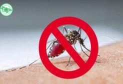 Những loại tinh dầu đuổi muỗi hiệu quả